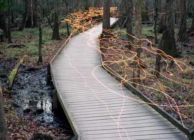 Congaree National Park by M David Farrell Jr